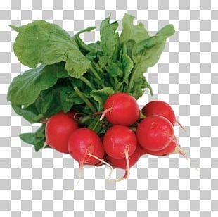 Organic Food Leaf Vegetable Salad PNG