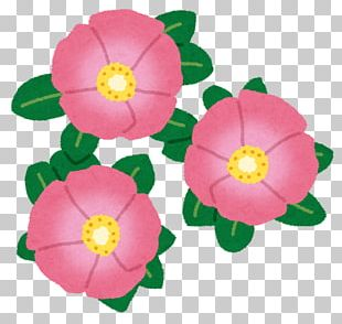 Beach Rose Cut Flowers Japanese Camellia Rose Family PNG