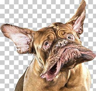 Shake Dogue De Bordeaux Photographer Photography Underwater Dogs PNG