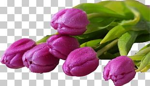 Flower Bouquet Desktop Tulip Display Resolution PNG