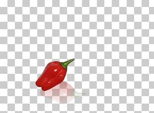 Habanero Bird's Eye Chili Serrano Pepper Tabasco Pepper Cayenne Pepper PNG
