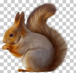 Tree Squirrels Squirrel Seeks Chipmunk PNG