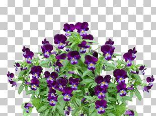 Violet Flower Plant PNG