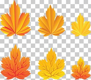Autumn Leaves Leaf Tree PNG