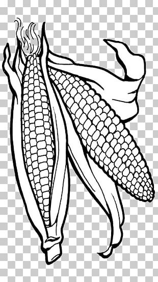 Corn On The Cob Coloring Book Candy Corn Maize Popcorn PNG