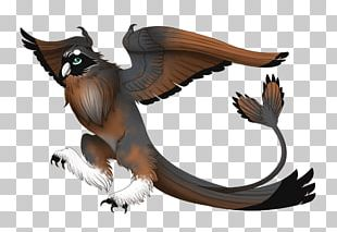 Owl Fauna Wildlife Beak PNG