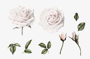 White Flower Bud PNG
