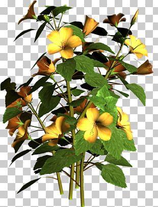 Flowering Plant Flowering Plant PNG