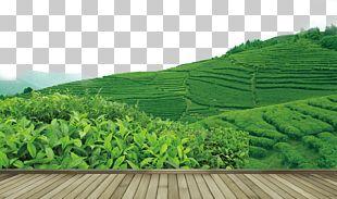 Tea Garden Yum Cha PNG