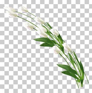 Floral Design Cut Flowers Flower Bouquet Plant PNG