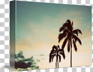 Painting Frames Arecaceae Tree Sky Plc PNG