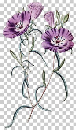 Cut Flowers Floral Design Gardening Plant Pest Control PNG