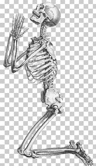 Human Skeleton Prayer Praying De Humani Corporis Fabrica Libri Septem PNG
