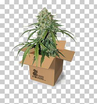 Autoflowering Cannabis Cannabidiol Cannabis Cultivation Cannabis Sativa PNG