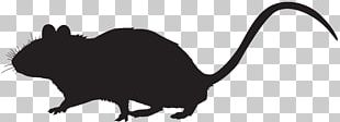 Mouse Silhouette Cat Photography PNG