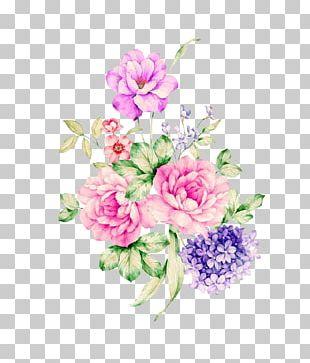 Moutan Peony Centifolia Roses Garden Roses PNG