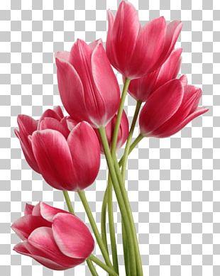 Tulip Bouquet PNG