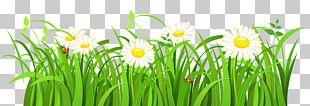 Grasses Euclidean PNG
