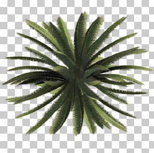 Tree Plant Shrub Site Plan PNG