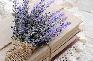 Lavender Book Flower PNG
