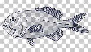 Deep Sea Fish Orange Roughy Blue Grenadier Species PNG