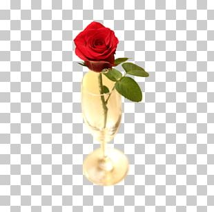 Beach Rose Garden Roses Flower PNG