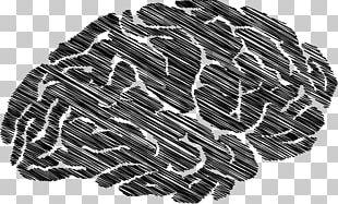 Zazzle Printing Information Brain Endocannabinoid System PNG