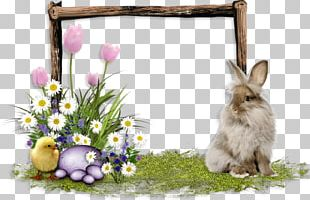 Domestic Rabbit Easter Hare PNG