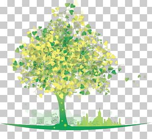 Drawing Tree Stock Photography PNG