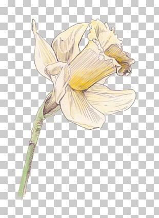 Flowering Plant Cut Flowers Drawing PNG