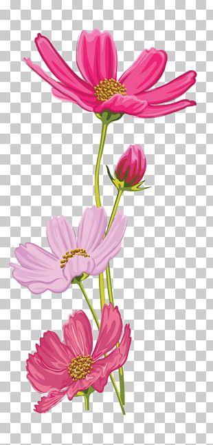 Garden Cosmos Cut Flowers Floral Design Plant Stem PNG