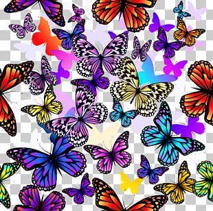 Butterfly Euclidean Pattern PNG