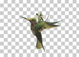 Hummingbird M Fauna Beak PNG