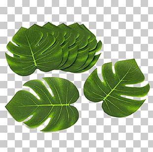 Cuisine Of Hawaii Luau Textile Party Arecaceae PNG