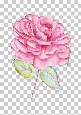 Centifolia Roses Garden Roses Floral Design Pink Cut Flowers PNG