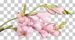 Cut Flowers Gift Patinha INN Christmas PNG