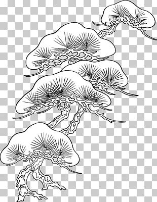 Drawing Flower Sketch PNG