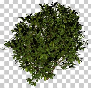 Shrub Icon PNG