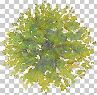Tree Site Plan Drawing PNG