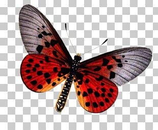 Butterfly Insect Stock Photography PNG