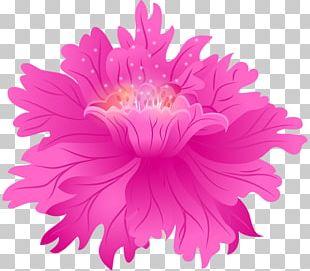 Chrysanthemum Rose Pink Flowers Photography PNG