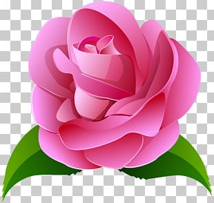 Rose Pink Painting PNG