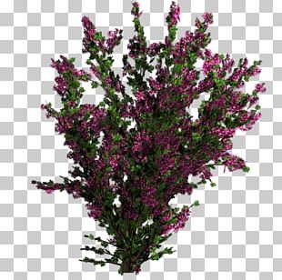 Flower Tree Shrub Plant Texture Mapping PNG