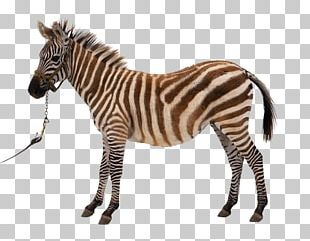 Horse Zebra Photography PNG