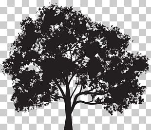 Silhouette Tree PNG
