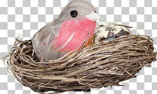 Edible Birds Nest Bird Nest PNG