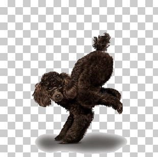 Chihuahua Golden Retriever Poodle Yoga Dogs PNG