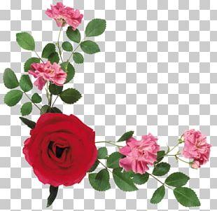 Portable Network Graphics Flower Psd Floral Design PNG