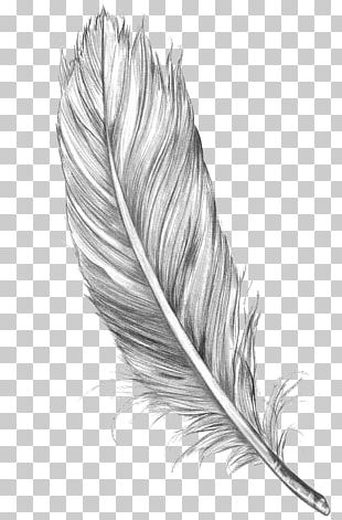 Drawing Feather Bird Art Sketch PNG