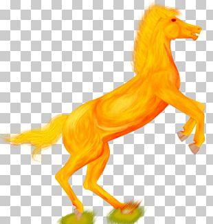 Mustang Dog Mane Canidae Freikörperkultur PNG